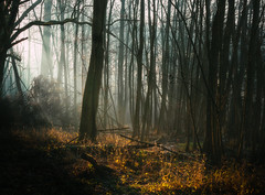 Morning Light in the Forest (SM_WZ) Tags: baum fog foggy forest frost haze hazy landscape morgen morning natur nature nebel nopeople tranquilscene tree trees wald winter woodland beautiful beauty