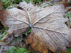 IMG_1906 (germancute ***) Tags: outdoor nature landscape landschaft thuringia thüringen wald
