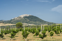 View of Rotondella, Basilicata, Italy (clodio61) Tags: basilicata europe italy july matera policoro rotondella southern agriculture color country day field green hill land landscape nature outdoor photography plant rural scenic summer sunny town tree