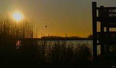 Comienza el día (candi...) Tags: amanecer trasluz sol naturaleza nature airelibre bassadelesolles mirador laguna lampolla ramas sonya77ii cielo
