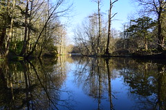 Clumber Park January 2020 (LMW76) Tags: clumber park national trust nottinghamshire january 2020 sunny blue sky clear landscape water lake reflection trees