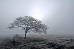 Foggy morning (Satyajit Chatterjee) Tags: fog foggy morning countryside limbodi indore madhyapradesh india village hazy loneliness road
