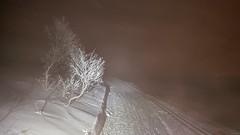 Frost tree mist (GeirB,) Tags: varanger vadsø vadsoe vintersykling vinter winter winterbike mist fog frostrøyk arctic 70north gps garmin klikkpedaler uteliv outdoorlife cold kaldt january friskifinnmark friluft finnmark fatbike 26x48 honey saturday cool hardrocxbikes circogigantexl surly sram shimano xtr 45nrth wolwhammer sweethelmet swix dissenter craft bad6000 northernnorway barentsregionen norway norwegen