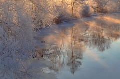 The morning sun (RdeUppsala) Tags: fyrisån fyris river río reflejo reflection spegling ricardofeinstein frost escarcha naturaleza nature natur invierno ice is water winter vatten vinter hielo agua landscape landskap light luz ljus uppland uppsala sverige suecia sweden morning mañana morgon trees träd árboles hoarfrost rimfrost