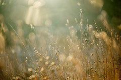 Winter Meadow, or is it summer, maybe autumn, and spring is on its way, i'm confused! (tonguedevil) Tags: outdoor outside countryside nature winter field meadow bokeh grasses colour light shadows sunlight