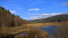 Lake Perlsee (Teresa (be there...)) Tags: perlsee waldmünchen bayern deutschland oberpfalz bavaria lake germany schilf moor herbst autumn november