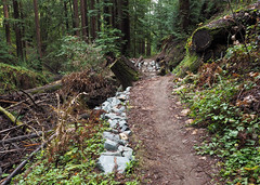 Realigned (LeftCoastKenny) Tags: phlegerestate huddartcountypark hill trees brush ferns trail path riprap