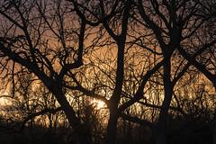 Sun between the trees (Santini1972) Tags: sunset girona altemporda trees sun aiguamolls catalonia nikond7500 nature