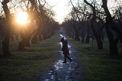 Apple trees at sunset (bluesteel44) Tags: backlight girl apple tree silouette path winter icy light pink moscow russia park коломенское