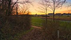 Lichtstimmung (KaAuenwasser) Tags: lichtstimmung sonne sonnenlicht sonnenuntergang himmel landschaft iffezheim weg galopprennbahn rennbahn wiese sträucher natur sandweg sand baum bäume januar 2020