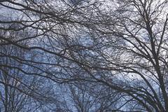 Chaos - Winter Limbs Sky Clouds (Modkuse) Tags: trees winter sky cloud nature clouds chaos natural cloudy bluesky limbs wintersky winterbeauty cloudyday art artistic fujifilm photoart fujinon artisticphotography natureart artphotography xh1 xf1655mmf28rlmwr fujinonxf1655mmf28rlmwr fujifilmxh1
