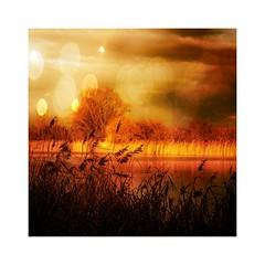 Golden sea (b_kohnert) Tags: digitalart digitalpainting painting nature landscape sea reed trees sky clouds outdoo