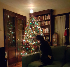 Ellie Mae at Christmas 2019 (Tim Evanson) Tags: ellie mydog myhouse christmas christmas2019 christmastree