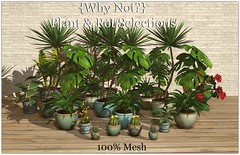 {Why Not?} Potted House Plants ({Why Not ?}) Tags: secondlife mesh whynot plants decor