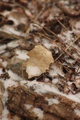 Snowy (historygradguy (jobhunting)) Tags: easton ny newyork upstate washingtoncounty leaf leaves winter snow