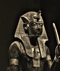 Tutankhamun Treasures Of The Golden Pharaoh (Volvoman.margate) Tags: tutankhamun treasures of the golden pharaoh saatchi gallery sloane square london tutankhamuntreasuresofthegoldenpharaohssaatchigallerymuseumexhibitoninlondonmummykingegypthowardcarter1922tombankhesfakhenatentheyoungerladyamenhotersmenkhnefernefboykinggoldenagethelegendoftutankhamuncapturedimaginatio andpresentedinlondonbyvikingcruisestutankhamuntreasuresofthegoldenpharaohunveilsmorethan150originalobjectsfromthetomb 60ofwhichhavetravelledoutofegypt andre van de cappelle volvomanmargate england english great bristish gb uk httpandrevandecappellephotographycom
