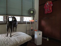 hersey and the air purifier (the foreign photographer - ฝรั่งถ่) Tags: hersey air purifier smog fan closet bedroom curtains canon our house bangkhen bangkok thailand