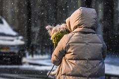 Snow (nycmayorsoffice) Tags: dog pets pet snow weather newyork ny usa
