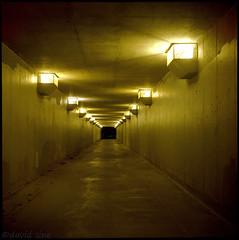 (david sine) Tags: madison wisconsin tunnel lights concrete nighttime dark stuff things yashica yashicaa tlr twinlensreflex mediumformat 120 color kodak portra film scannednegative fullframe