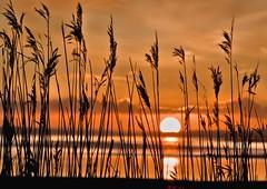 sunset through the reeds (Ade Ward Phototherapy.) Tags: coast reedbeds newport sun water reeds sunset estuary wales riverusk nationalnaturereserve newportwetlands wetlands