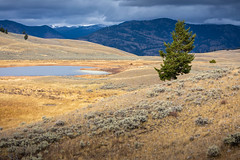 Grass field inside Yellowstone National Park, Wyoming. (jack-sooksan) Tags: grass field meadow heather valley hill slope nature land landscape forest jungle wood woods tree yellowstone yellowstonenationalpark park wyoming america usa unitedstates lea mount mountain natural