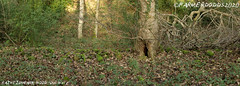 RAINTONPARK WOOD: 'Old Walls' (nigelalandodds) Tags: raintonpark wood old walls raintonparkwood durham corridor westrainton mallygill deerpark archaeology