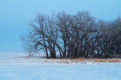 Anglų lietuvių žodynas. Žodis arboreal reiškia a 1) medžio; susijęs su medžiais; 2) gyvenąs medžiuose lietuviškai.