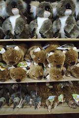 Australian wildlife (Mollivan Jon) Tags: 595briggsroad australia bonorongwildlifesanctuary briggsroad brighton geotagged geotaggedwithiphonesecyclemeterapp places species tachyglossusaculeatussetosus tasmania vombatusursinus mollivan softtoyplushtoy taxonomy:binomial=tachyglossusaculeatus taxonomy:binomial=vombatusursinus taxonomy:class=mammalia taxonomy:common=commonwombat taxonomy:common=tasmanianechidna taxonomy:family=tachyglossidae taxonomy:family=vombatidae taxonomy:genus=tachyglossus taxonomy:genus=vombatus taxonomy:kingdom=animalia taxonomy:order=diprotodontia taxonomy:order=monotremata taxonomy:phylum=chordata taxonomy:trinomial=tachyglossusaculeatussetosus toy