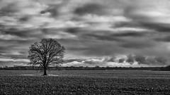Topless (Zoom58.9) Tags: sky clouds field tree wintertime nature landscape outside monochrome bw himmel wolken feld baum winterzeit natur landschaft draussen sw sony sonydscrx10m4