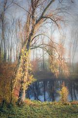 Feather dance (Ingeborg Ruyken) Tags: ochtend morning november sunrise tree dawn 500pxs natuurfotografie grootewiel fall empel autumn