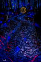 Lichter im Droßerwald (AnBind) Tags: schnee motive lightpainting orte light blauestunde meinegegend dros abend 2020 wald licht lichtmalerei