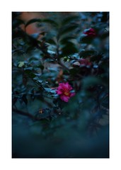 This work is 12/18 works taken on 2019/12/15 (shin ikegami) Tags: sony ilce7m2 a7ii sonycamera 50mm lomography lomoartlens newjupiter3 tokyo 単焦点 iso800 ndfilter light shadow 自然 nature naturephotography 玉ボケ bokeh depthoffield art artphotography japan earth asia portrait portraitphotography
