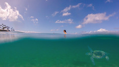 Two Worlds (Tom Fenske Photography) Tags: hawaii maui turtle swimming floating ocean travel beach people wild wildlife