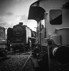 More stored trains (Ric Evers) Tags: steamtrain lieren blackandwhite rolleiflex trains bw gelderland