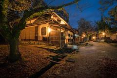 Remembrance (Gift of Light) Tags: nara narapark japan travel winter landscape park morning twilight bluehour longexposure sony sonyalpha alpha sonya9 a9 sonyfe1635mmf28gm fe 1635mm 163528 281635 f28 gm