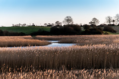 Down in the marshes (njr33s) Tags: marsh marshes river reeds gold landscape hill