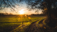 Golden Moment (Christian Wilmes) Tags: emsland sonne sonnenaufgang sunrise goldenhour light licht colours farbem lightrays lichtstrahlen spaziergang morninghour sony sonya7iii tamron2875