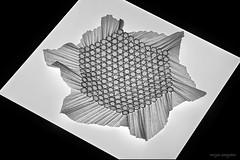 A large grid (De Rode Olifant) Tags: origami origamitessellation start tessellation triangle hexagon marjansmeijsters aworkinprogress paper paperart papiroflexia