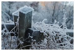 Frozen (Eckehard Straßweg) Tags: nature winter eis januar schnee snow zaun fence kalt coldness cold january outside outdoor natur ice