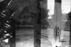 Until the bones (Kfz231) Tags: art bw blackandwhite orwo orwoun54 fanalog durango lagosdemoreno outside film filmphotography lomography lcw pentax pentaxmx 35mm filmswap street buyfilmnotmegapixels ishootfilm