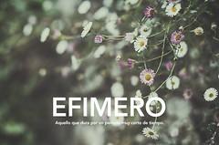 Efímero (Graella) Tags: efimero projects2020 flowers flores nature ireland irlanda beautiful plants 15palabras2020 15palabras2020graella text texto words travel