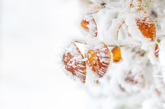 e-lias-ICC_9221-Edit (e-lias hun) Tags: leafs frost ice winter colors helios44m4 m42lens vintagelens nikond7000 elias hungary