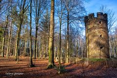 Muziekbos Ronse on a sunny winterday (Fabke.be) Tags: muziekbos nature natuur bos wood winter canonm50