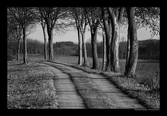GRENZLAND (herbert thomas hesse) Tags: grenzland grenzlinie grenze borderline kolonnenweg weg bäume baumreihe sw bw monochrome hth