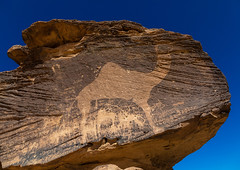 Life-sized camel petroglyph on a rock, Najran Province, Thar, Saudi Arabia (Eric Lafforgue) Tags: ancient arabia ancientcivilisation art archaeology horizontal day desert engraving cultures emptyquarter famousplace colorpicture indigenousculture incenseroute birhima bi'rhima rock outdoors photography middleeast nopeople petroglyph preserves petroglyphs ksa prehistoricrockart nonurbanscene ksa190817 travel tourism saudiarabia thar rockart rockcarving traveldestinations rubalkhali stoneobject najranprovince rockobject