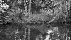 *** (pszcz9) Tags: przyroda nature natura naturaleza landscapepark parkkrajobrazowy borytucholskie woda wat drzewo tree odbicie reflection pejzaż landscape beautifulearth bw blackandwhite monochrome czarnobiałe sony a77