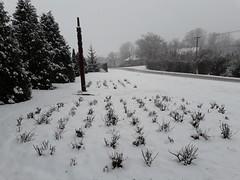 20200119_111707 (Győrsövényház) Tags: győrsövényház gyorsovenyhaz hó ho snow schnee havazás havazas