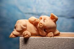Ceramic - [MacroMonday_20200120] (Arranion) Tags: hmm macromonday monday macro macromondays ceramic themed pig sleeping edge