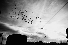 Flight (ewitsoe) Tags: buses mpk nikon poznan street trams winter erikwitsoe poland urban mood travel citylife everyday moments cinematic cinema cityscape urbanlifestyle lightandshadow bnw blackandwhite mono monochrome