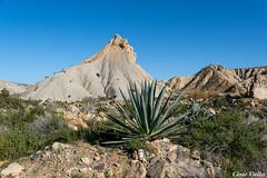 Desierto de Tabernas (cvielba) Tags: almeria cactus desierto tabernas